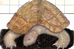 la-tortue-2016-michel-lablais